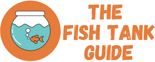 The Fish Tank Guide